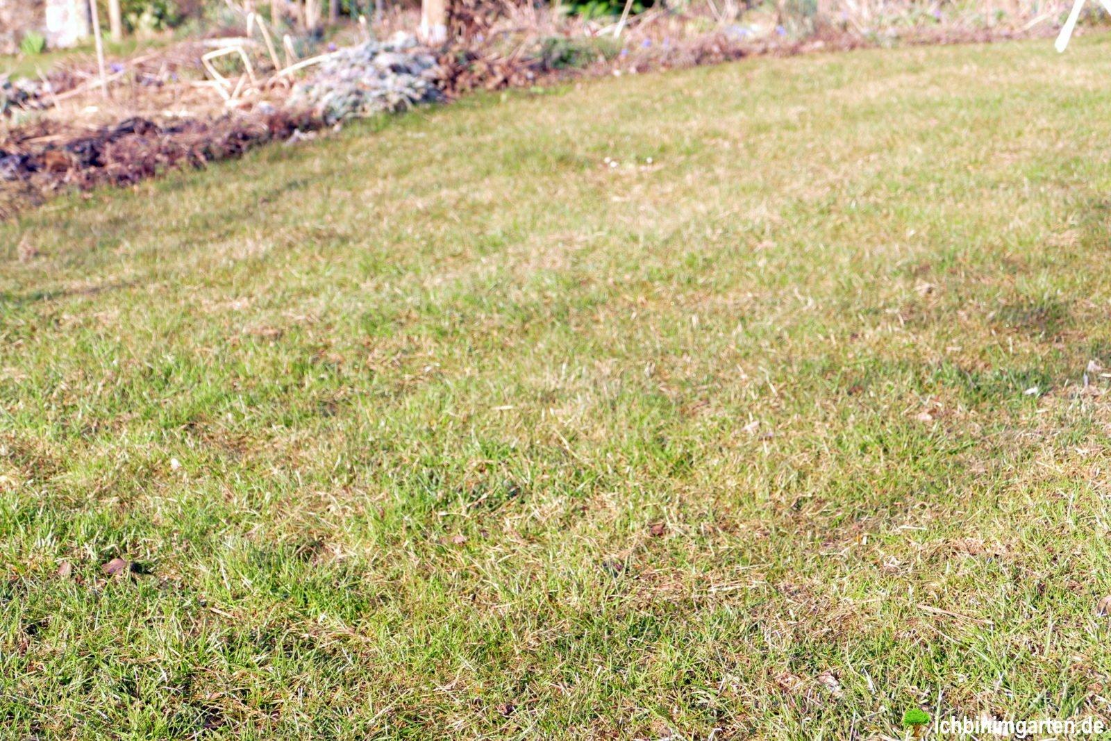 Rasen in Kräuterrasen umwandeln 1
