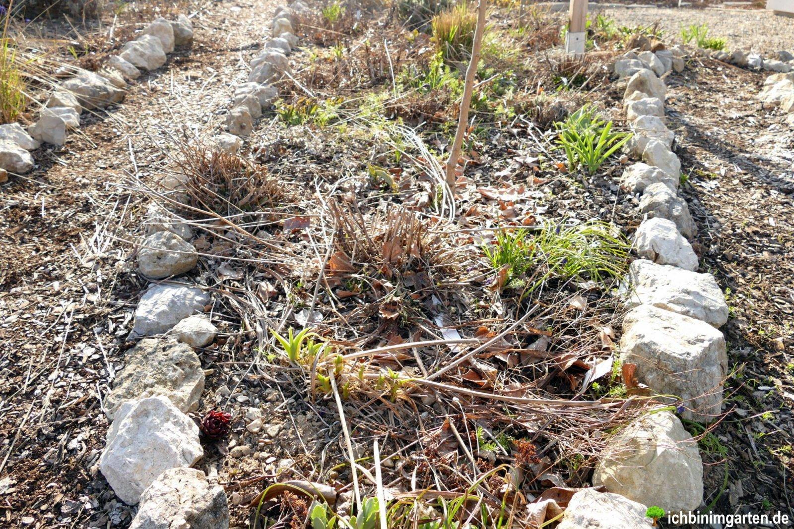 Rasen in Stauden- Mischpflanzung umwandeln 3
